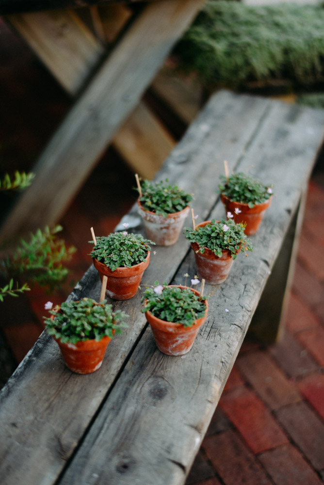 tiny pots with greenery on bench