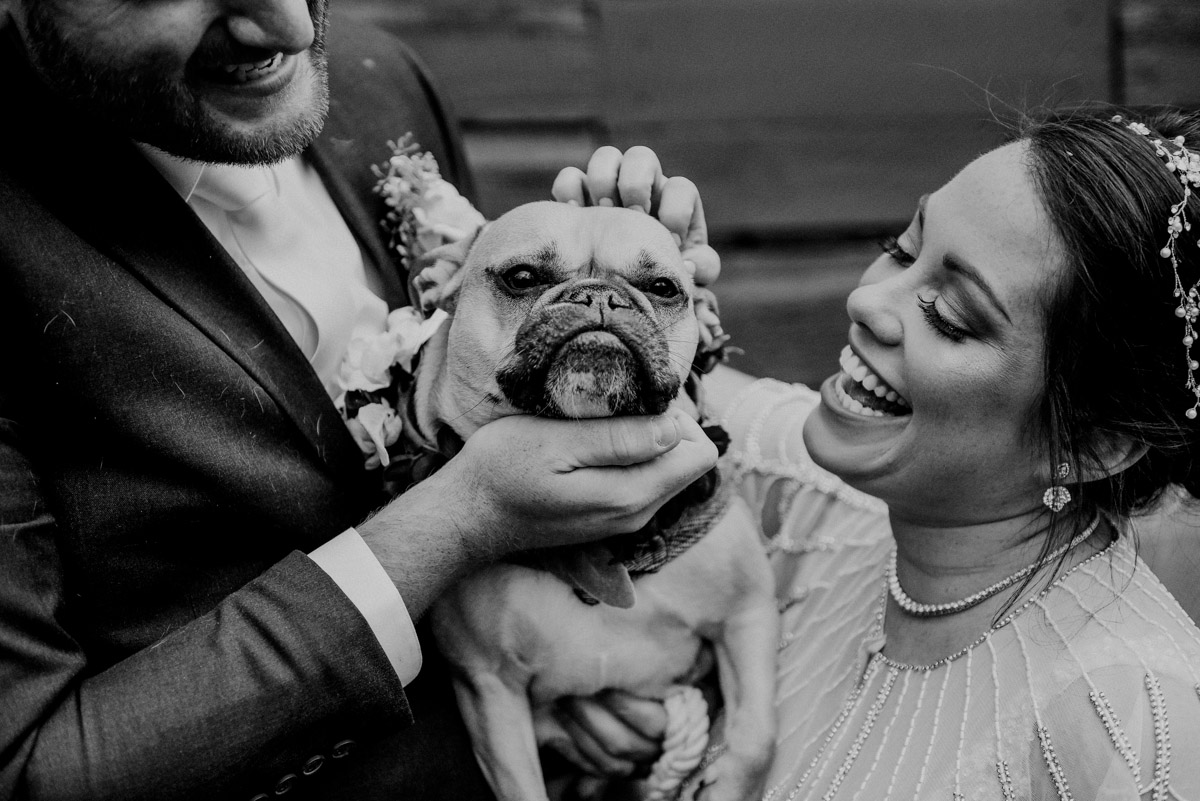 french bulldog with bride and groom in black and white