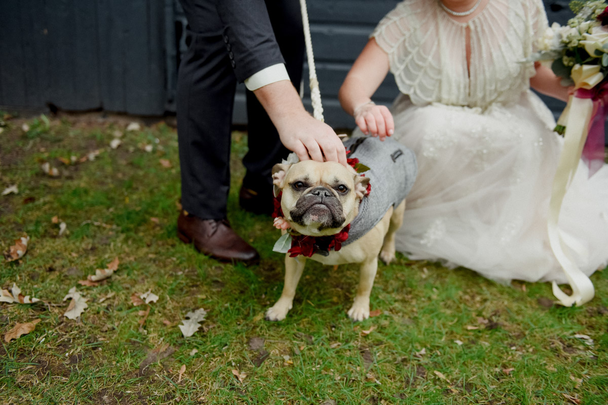 french bulldog wedding with jacket and flowers