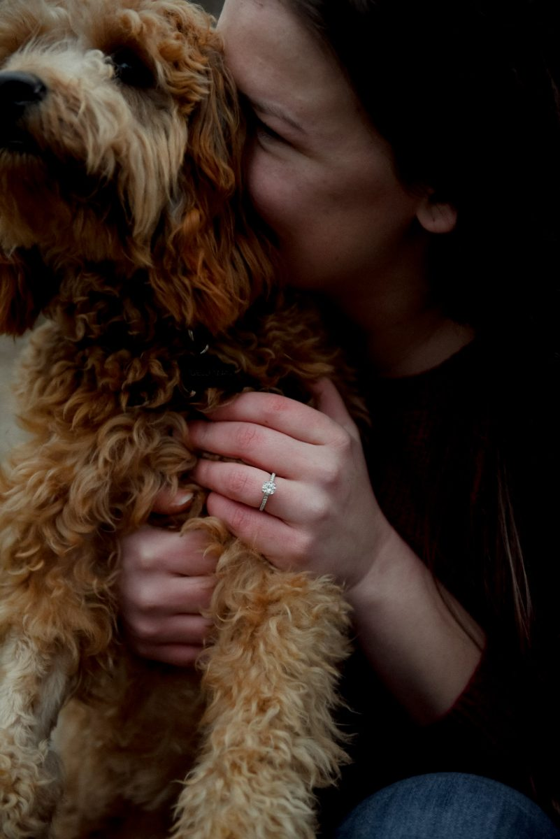 engagement ring with cockapoo puppy